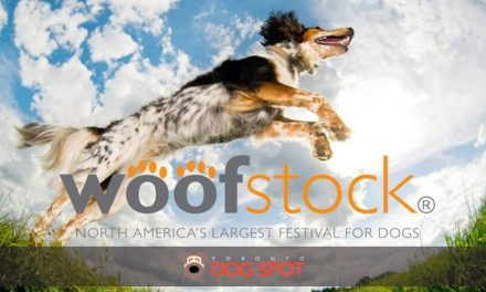 How much would you pay to go to Woofstock?