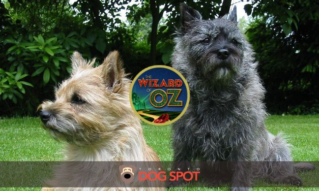 The Search is on for the Next Toto!  Will your pup have its claim to fame?