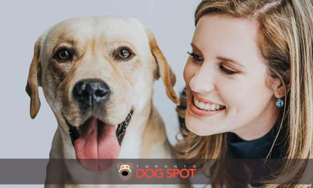 Is healthypets.io the Next Big Thing in Pet Health Care?