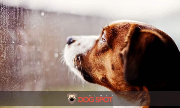 10 Indoor Activities for You and Your Pup on a Cold, Cold, Wet Day
