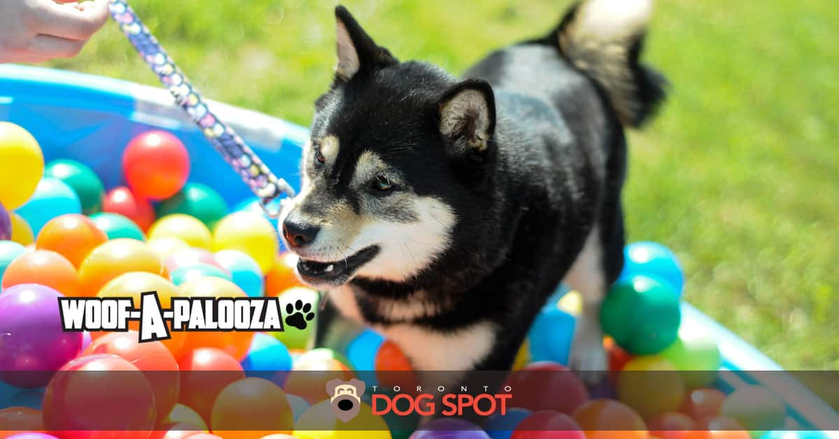 2017 Woof-A-Palooza Festival Review