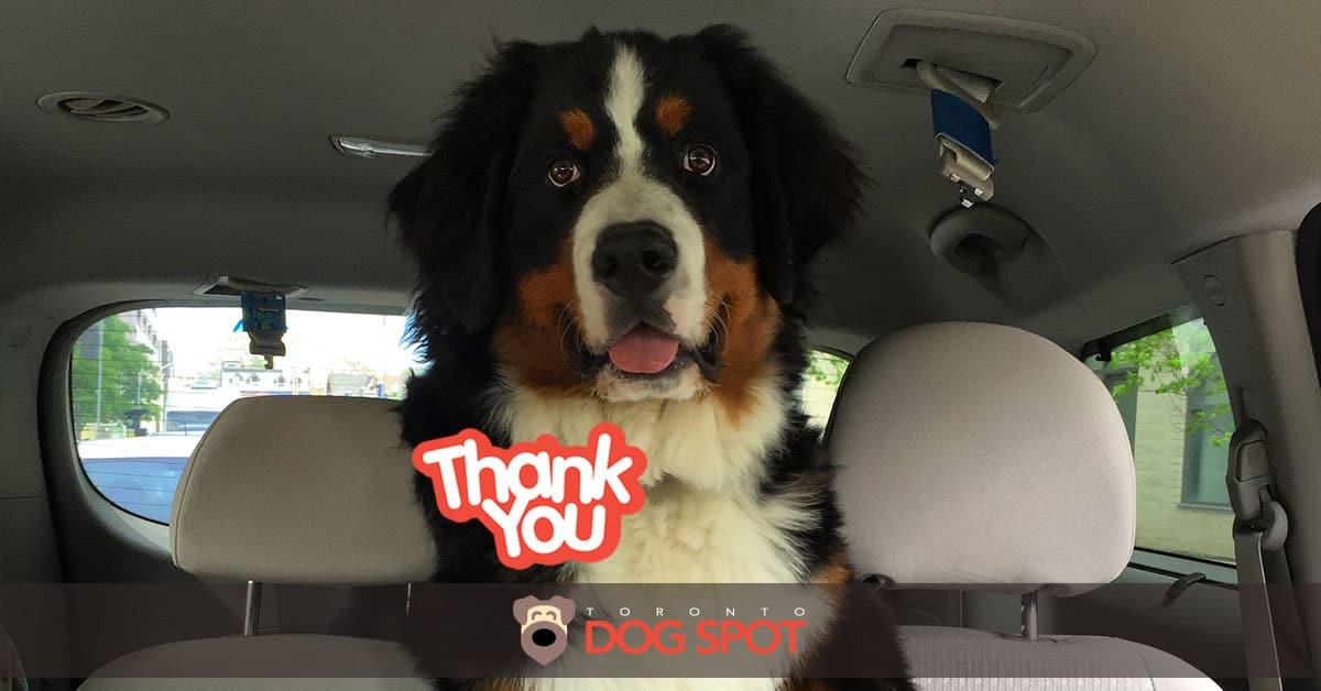 Happy One-Month Anniversary Toronto Dog Spot!