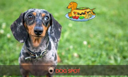 It's Time to Show Off your Wiener. The Wienerfest Home County Festival is Here!