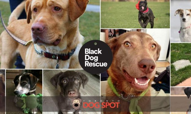 How Black Dog Rescue is Saving Lives One Dog at a Time