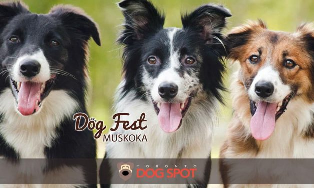 Dog Fest Muskoka – Cottage Country's Dog Festival