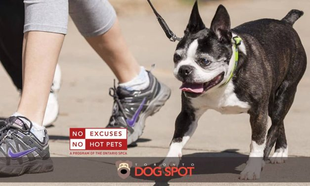 How to Prevent Dog Paw Burns from Hot Pavement this Summer