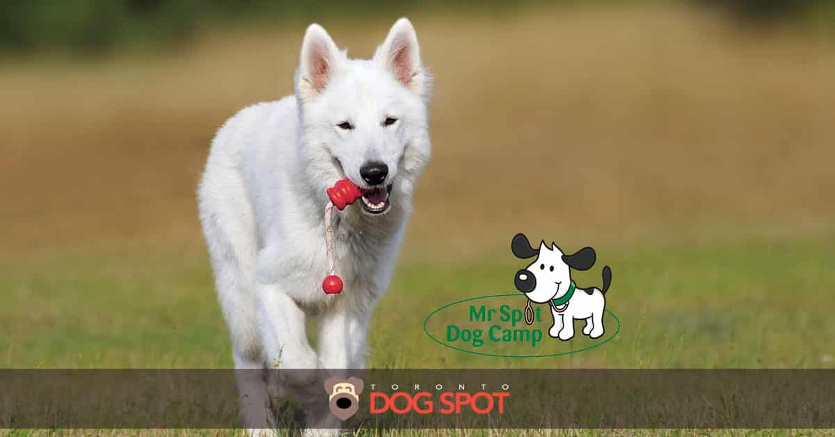 Mr. Spot Dog Camp is a Perfect Getaway for You and Your Pup