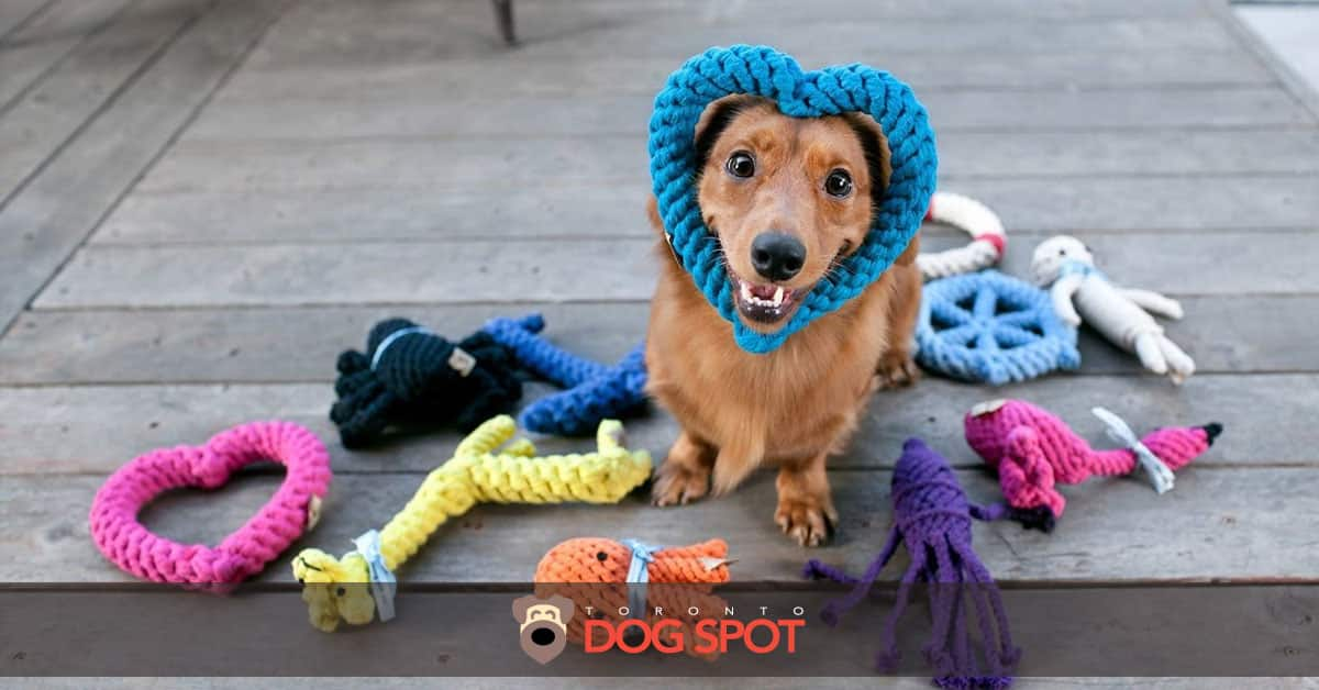 5 Dog Travel Essentials for a Happy Pupcation