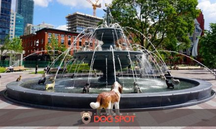 A Look at Toronto's Newest Cool Dog Fountain at Berczy Park