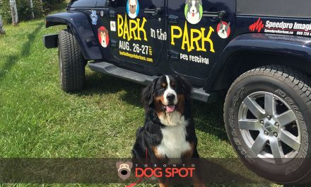 2017 Bark in the Park Durham Dog Festival Review