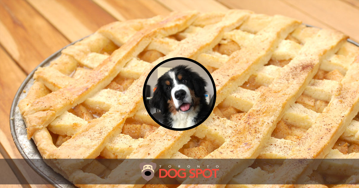 Can Dogs Eat Apple Pie?