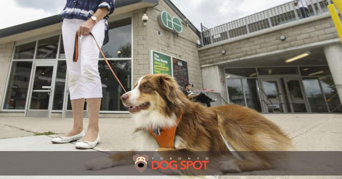 Will Metrolinx Change its Pet Policy?