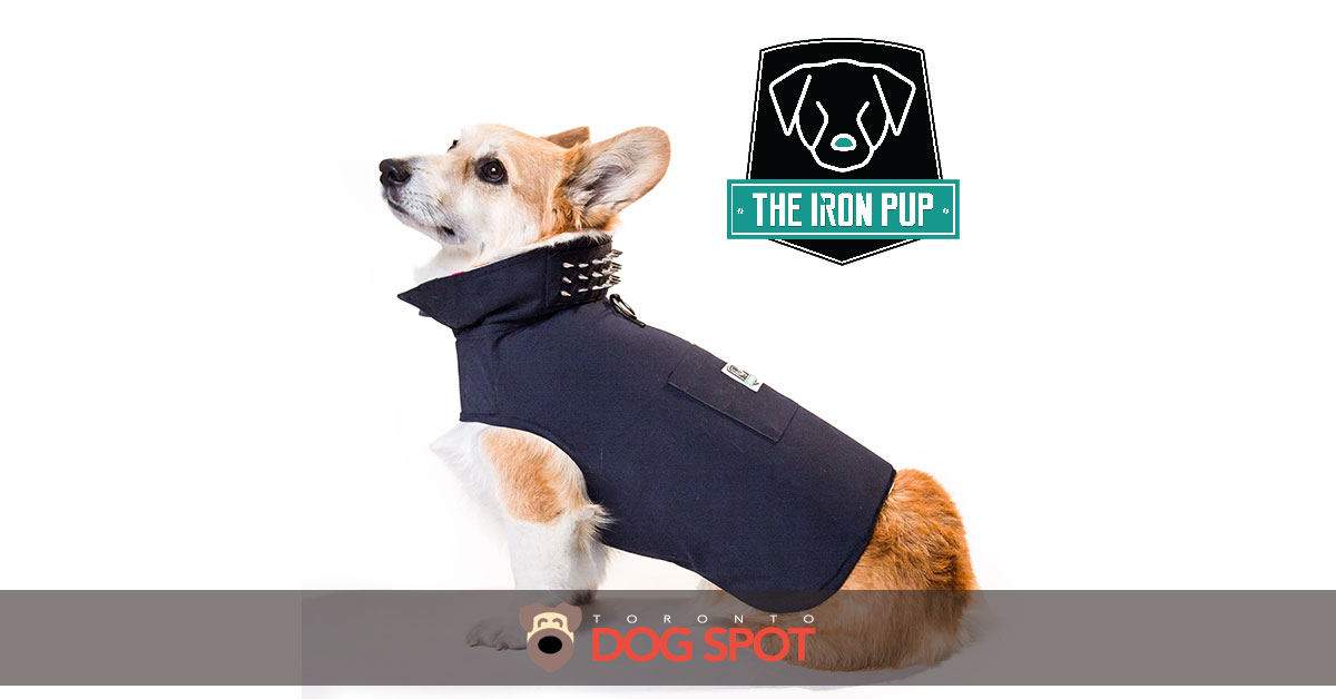 How The Iron Pup can Give Your Dog Super Powers
