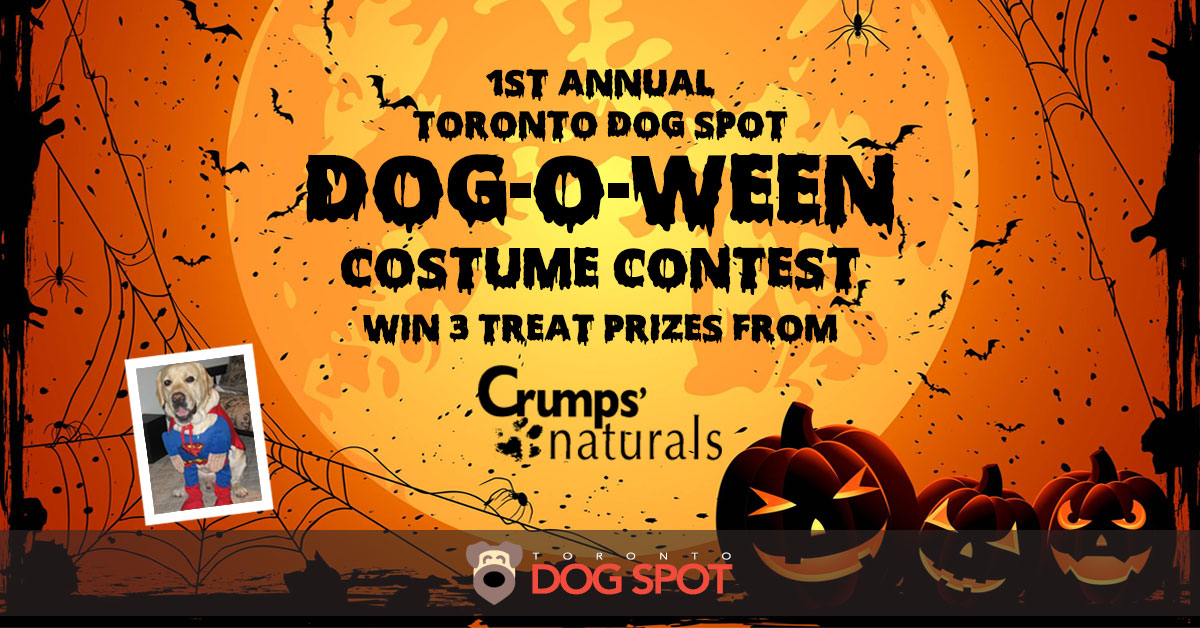 1st Annual Toronto Dog Spot Dog-O-Ween Costume Contest