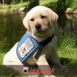 The Miracle of Seizure Dogs