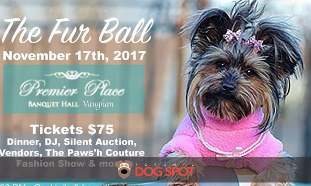 Woof-A-Palooza Presents the 2017 Fur Ball