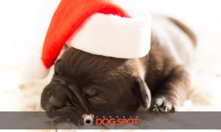 What to Consider Before Gifting a Pup for Christmas