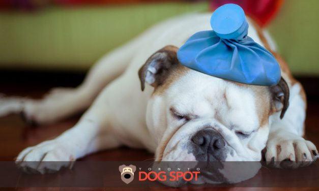 Dog Diseases – What You Should Know About Canine Flu
