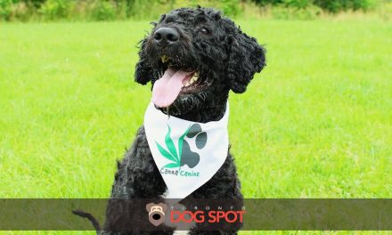 How CannaCanine uses Hemp CBD to Help Dogs