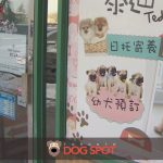 Questions Over Markham Pet Store and Ethical Treatment of Animals
