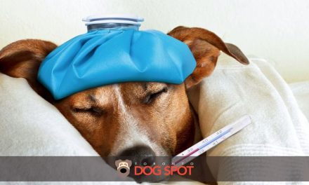 How the Canine Flu Reached Canada