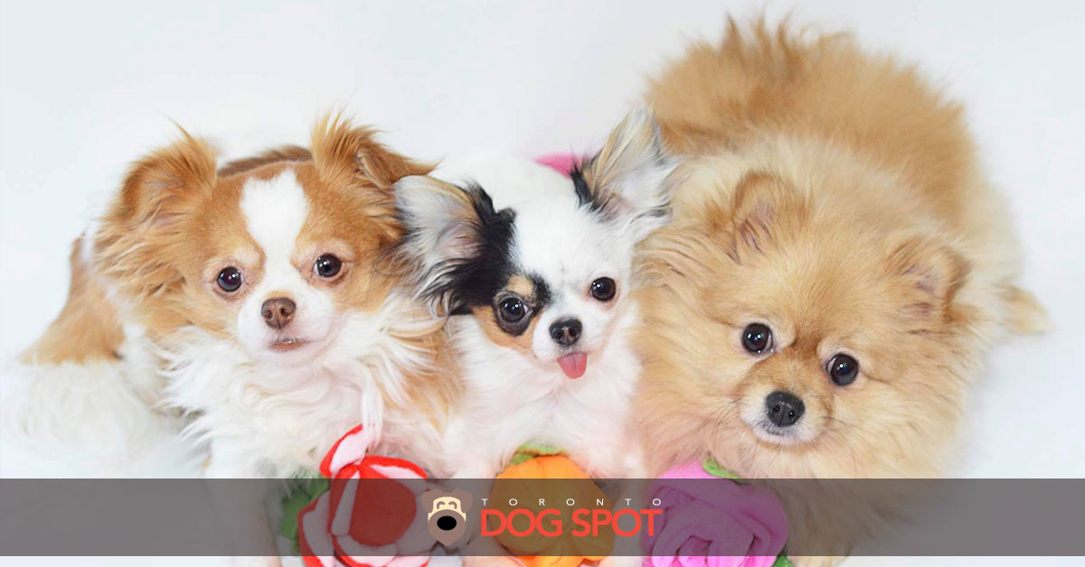 Meet The Three Furry Beauties